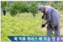 북한을 위한 기도는 기적을 만든다